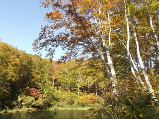 141018_1430_県道上越飯山線(関田峠・茶屋池)