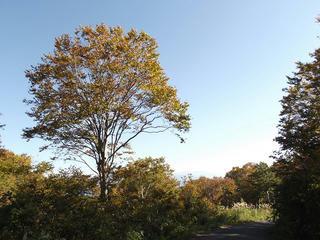 141018_1435_2_県道上越飯山線(関田峠・茶屋池)