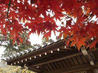 141115_1153_若穂保科・清水寺の紅葉(長野市)