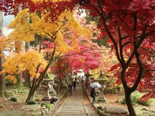 141115_1202_若穂保科・清水寺の紅葉(長野市)