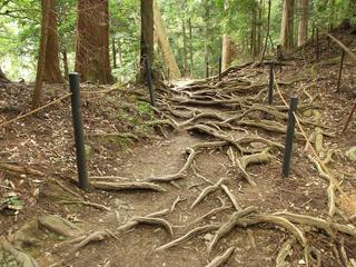130914_1113_総本山鞍馬寺・奥の院魔王殿に続く木の根道(京都市左京区)