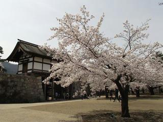 150412_1115_松代城跡に咲く満開のソメイヨシノ(長野市松代町)