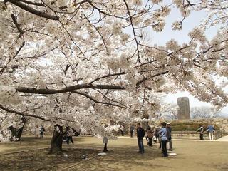 150412_1116_松代城跡に咲く満開のソメイヨシノ(長野市松代町)