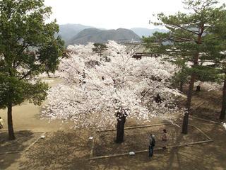150412_1119_松代城跡に咲く満開のソメイヨシノ(長野市松代町)