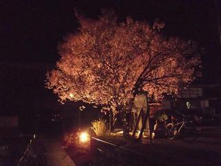 150417_2113_ライトアップされた福寿院のコヒガンザクラ(茅野市)
