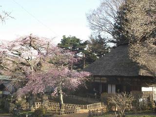 150418_0731_茅葺屋根の観音堂に咲く「高森観音堂しだれ桜」(富士見町)
