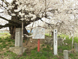 150418_1331_1_宇木の古代桜・千歳桜(山ノ内町)