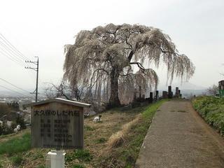 150418_1355_宇木の古代桜・大久保の桜(山ノ内町)
