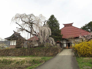 150418_1426_宇木の古代桜・隆谷寺の桜(山ノ内町)