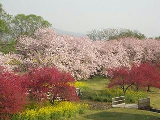 150425_0751_千曲川ふれあい公園(小布施町)