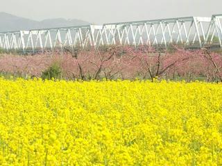 150425_0735_千曲川ふれあい公園(小布施町)
