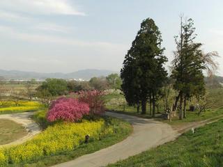 150425_0745_千曲川ふれあい公園(小布施町)