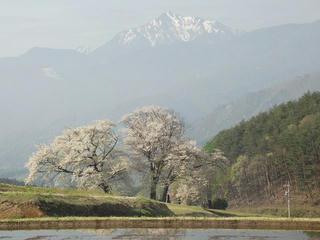 150429_0740_田端鼎談桜(富士見町)