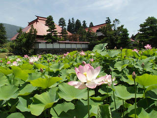 150712_1209_稲泉寺の大賀ハス(木島平村)