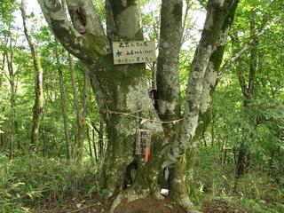150725_0929_守屋山・西峰(諏訪市)