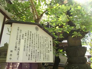 150919_1132_曹洞宗 少林山 頼岳寺(茅野市)