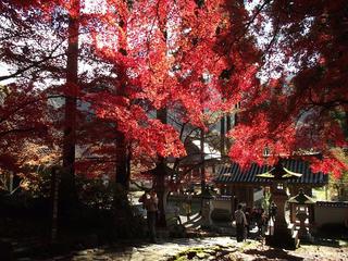 151115_1301_若穂保科・清水寺の紅葉(長野市)