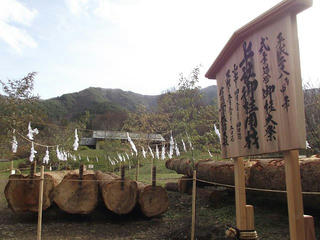 151121_1214_かやぶきの館に勢揃いした諏訪大社御柱祭に使われる上社御用材(辰野町)