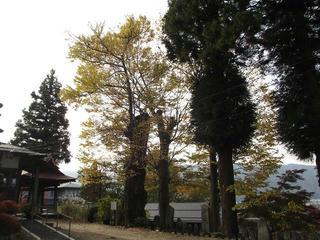 151031_0942_地蔵院のカツラ(諏訪市)