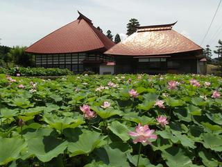 160710_1146_稲泉寺の大賀ハス(木島平村)