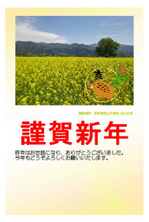 19_年賀状(飯山市常盤の千曲川河川敷に咲く「菜の花」)