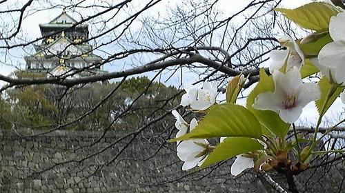 20090401osakajo-sakura.jpg