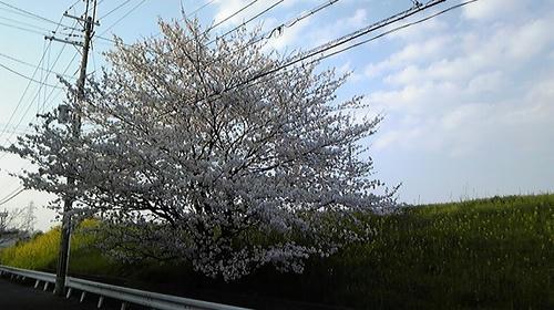 20090408jitakumae.jpg