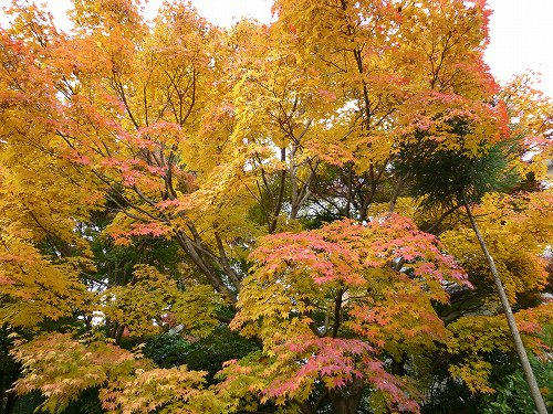 20101125ryoanji.jpg