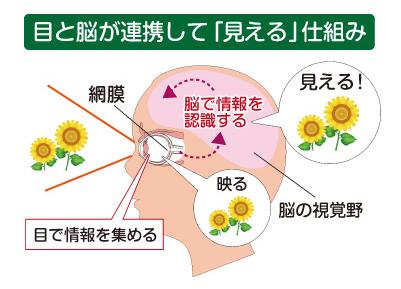 目から入った情報が脳が認識するメカニズムのイメージ