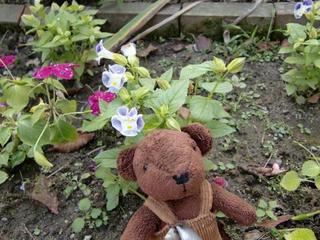 庭の花とベア