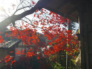 紅葉とベア4