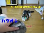 fb57819d.jpg