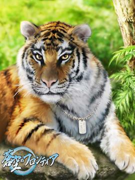 どうも、虎です。