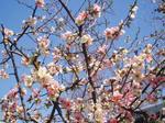 april-blossum-2.jpg