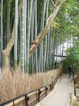 kyoto-200904.jpg