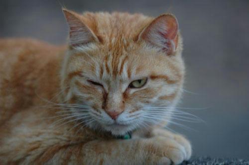 忍者ブログ なかなかするどい目付きの猫(ぬこ)ちゃん。 ボス猫で怖いと思ったら エサをあげたら可