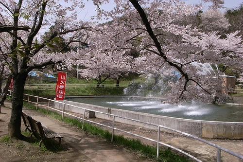信夫山の桜と噴水