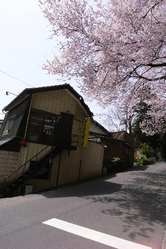 信夫山近辺の桜