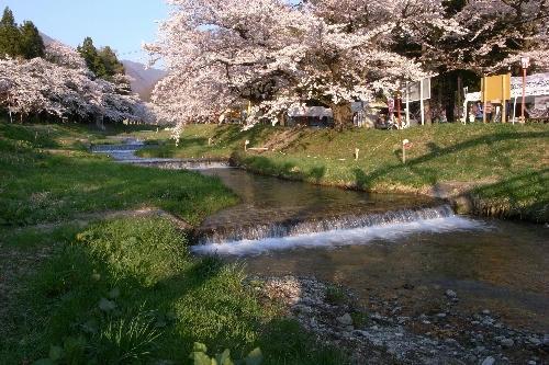 福島県 桜並木 猪苗代町 川桁
