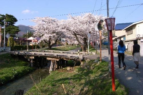 福島県 猪苗代町 川桁 桜回廊