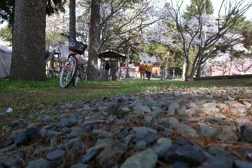 福島県 猪苗代町 川桁神社 桜
