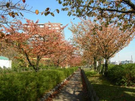 やすらぎ堤2010秋
