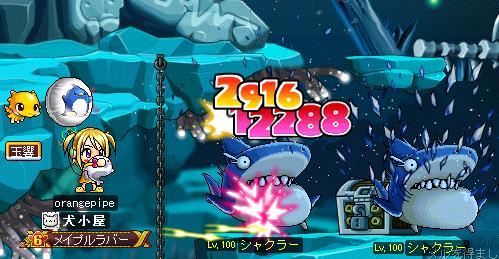 サメと戯れる