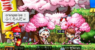 桜が増します
