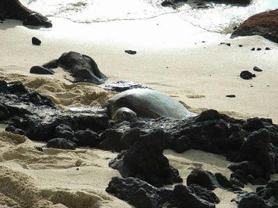 hawaii2009_21.jpg