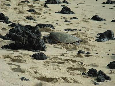 hawaii2009_22.jpg