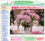 胡蝶蘭の愛華園芸
