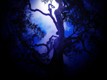 blue.tree.l.jpg