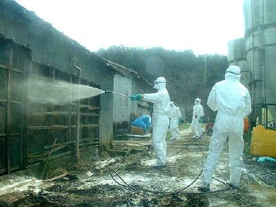 養鶏場での消毒作業