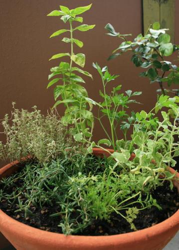 Mon Jardin Et Ma Maison ッチンハーブの寄せ植え